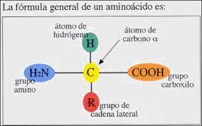 aminoácido1